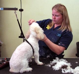Professional veterinarian at Capeside Animal Hospital
