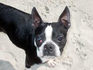 Owen at the beach
