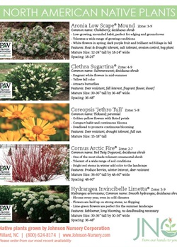 Native Plants Chart