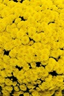 /Images/johnsonnursery/product-images/Mouria_yellow_ugc84fkiu.jpg