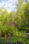 Alaska Botanical Garden - 4